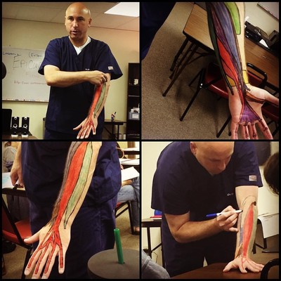 Illustrated muscles on teacher's arm